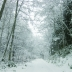 into the snow_800.jpg