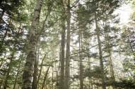 フプの森が森を持ったわけ