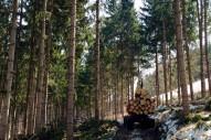 下川町と林業