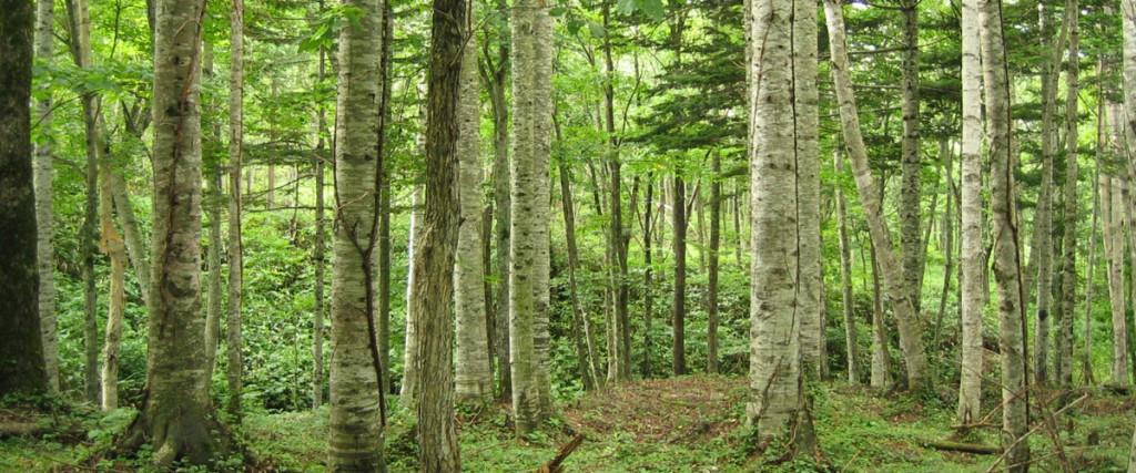 フプの森用_1200500