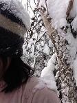 幹ゆさぶり雪かぶり2