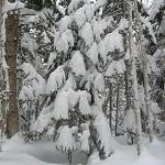 雪をかぶったトド